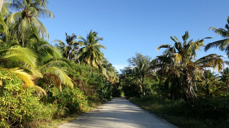 The Way Forward Outdoors Nature Sky Road Palm Tree Tree Day Plant Clear Sky No People Beauty In Nature Beautiful Clear Pathway No Danger Peace And Quiet Sunny Side Of Life Check This Out Taking Photos Takingphotos Take Photos My Maldives Maldives A Place Somewhere In Gan Island