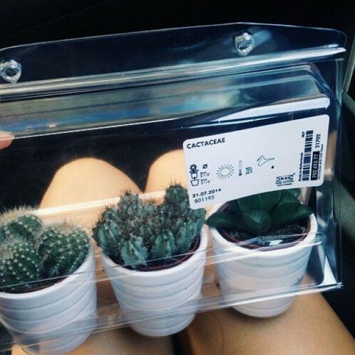 Zakupy Kaktusy Cactus Vscocam ❁