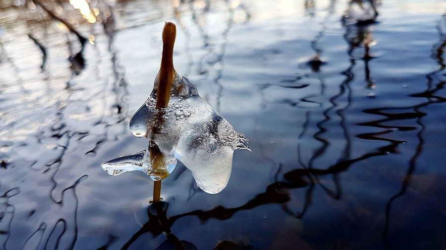 Close to water Ice Ice Formations Ice Sculpture Ice Shapes Art By Nature Abstractions In Nature Nofilter Reflection Blue Water Cold Temperature Cold Days EyeEm Selects Water Reflection No People Nature Close-up Outdoors Beauty In Nature Day