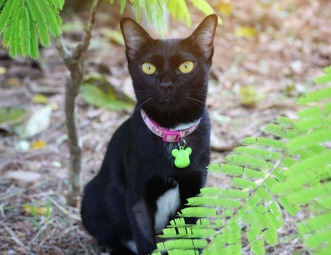 Portrait of black cat on plant