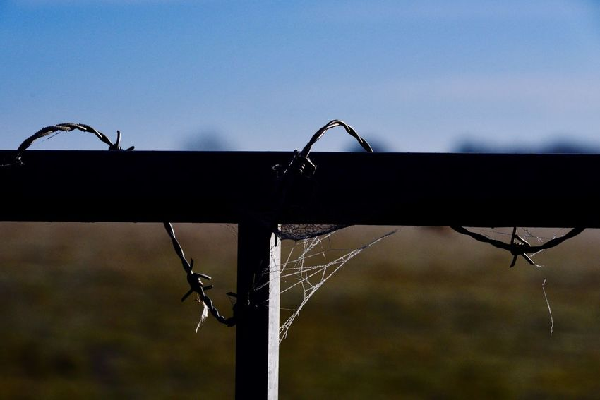 Focus On Foreground Metal Fence Close-up Sky Protection No People Day Animal Themes Outdoors Grass Nature Barbed Wire Metal Spiderweb Frost Frozen Fragility Silhouette