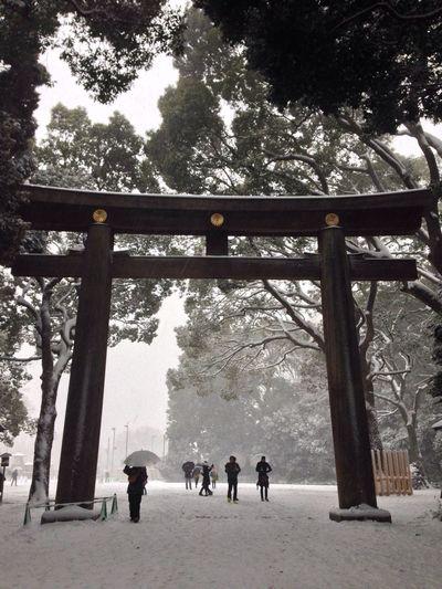 Japan Scenery Walking In The Snow Snow Tokyo