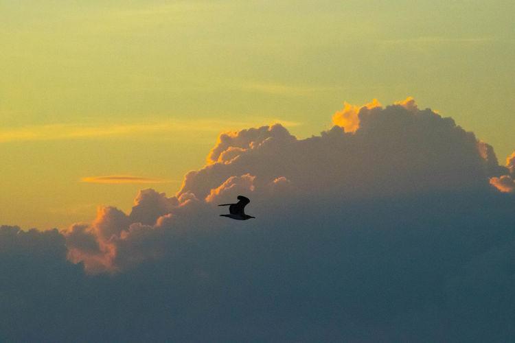EyeEm Best Shots - Sunsets + Sunrise New Smyrna Beach Florida Birds Sunrise Sunrise_sunsets_aroundworld Clouds And Sky Florida Clouds Florida Life GayneGirlPhotography EyeEm Best Shots Eye4photography  EyeEm Gallery EyeEm Best Shots - Nature Sunrise Porn Sunrise And Clouds Sunrise N Sunsets Worldwide