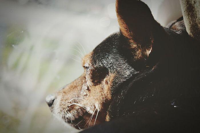 Dog Mammal Close-up Cute Portrait Alertness
