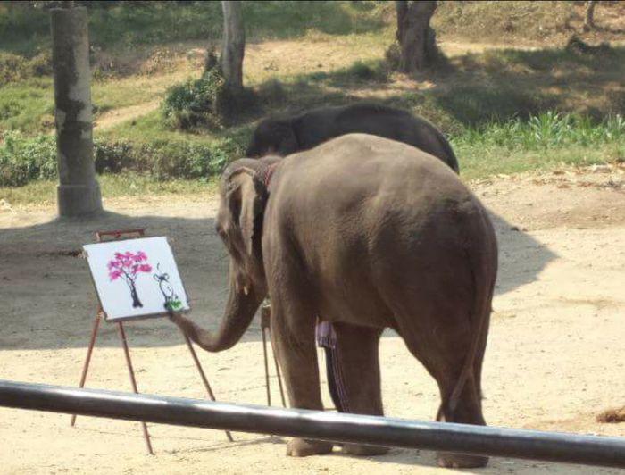ช้างวาดรูป Animal Themes One Animal Domestic Animals Mammal Full Length Standing Zoology Animal Livestock Herbivorous Outdoors Day