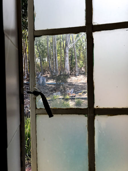 Through the glass Broken Window Day Indoors  Nature No People Old Window Through The Glass Travel Destinations Travel Photography Tree Window