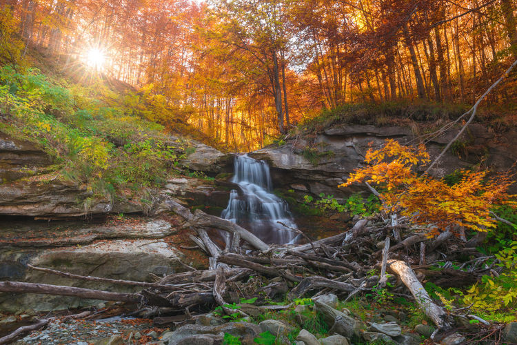 Scenic view of waterfall in forest during autumn