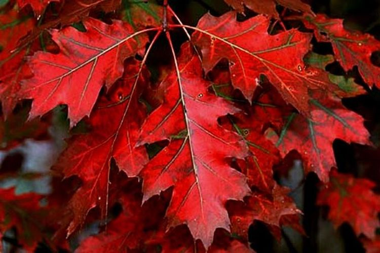 осень прекрасна 🌾🍂🍃 осень Осень 🍁🍂 листья осенние листья