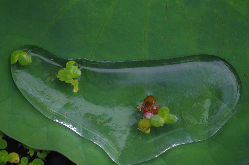 EyeEm EyeEm Best Shots EyeEm Gallery Water Nature Shenzhen EyeEm Nature Lover Flower Leaf Lotus Water Lily Water Lily Plant Fragility Beauty In Nature Lotus Flower Freshness Relaxing