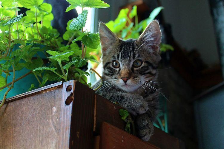kitten and