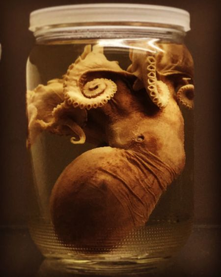 Octopuse Indoors  Jar Machinery Close-up Old-fashioned No People Indoors  Water Art