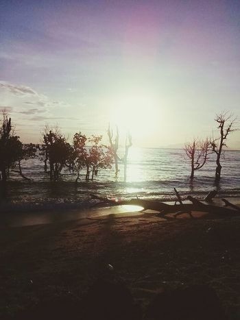 Water Tree Sea Beach Silhouette Sky Horizon Over Water Sunset