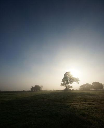 Atmosphere Atmospheric Mood Dusk Enlighten Enlightenment Grass Horizon Over Land Light Majestic Morning Outdoors Silhouette Sky Spirituel Sunrise Sunset Trees Landscapes With WhiteWall