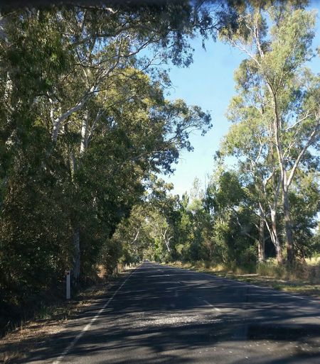 Tree_collection Love The Way Trees Line The Road One Tree Hill South Australia