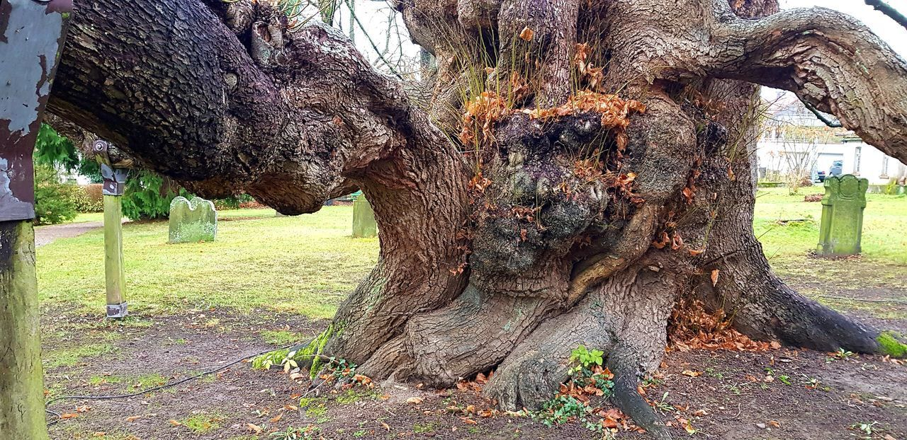 TREE TRUNK IN PARK