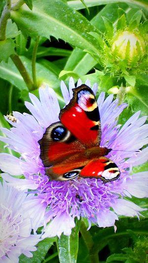 Butterfly flower Beauty In Nature Animal Wildlife Botanical Garden Zagreb Croatia