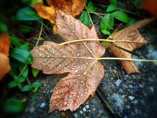 Tadaa Community Danmark Maple Fall Colors