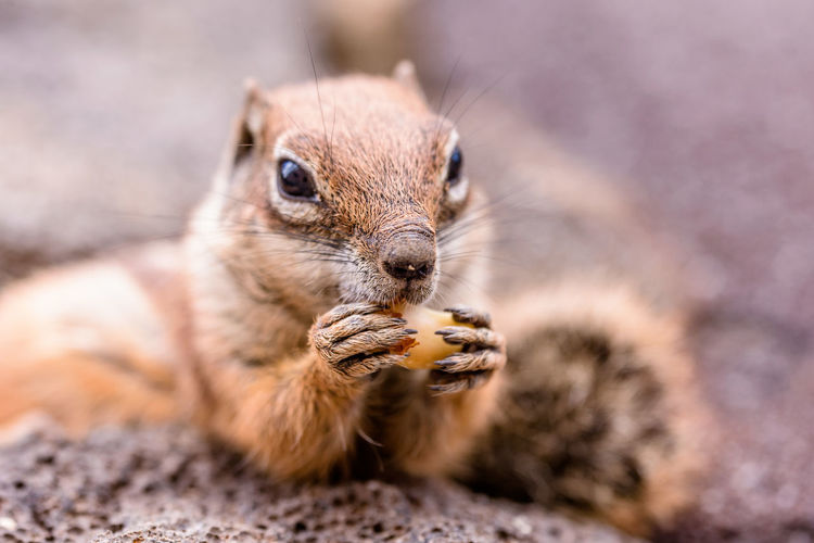 Close-up of squirrel eating