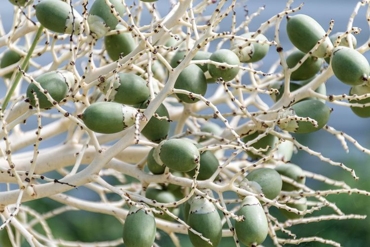 Low angle view of fruit growing on tree