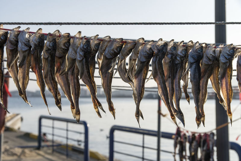 Dried fishes hanging on ropes at harbor during sunny day