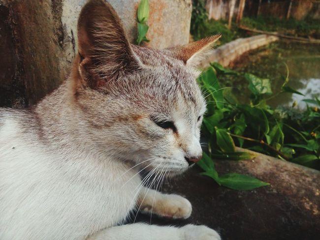 Cat Cat My First Uploading Photo 18-02-2018: 6:17 @ M Debabrata Deb Focused Ordinary Cat Relaxing Cat EyeEm Selects