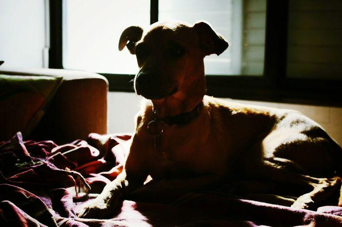 Dogs Eye4photography  EyeEm Best Shots Animals