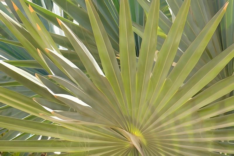 Full frame shot of palm tree on field