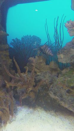 The beauty of the lion fish ? Swimming Exploring Ilovethesea