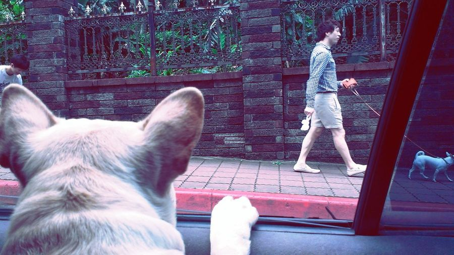 Franchbulldog The View From My Window Pets From My Point Of View Playing With The Animals Cute Dog  Dog Street Photography From My Window The Human Condition