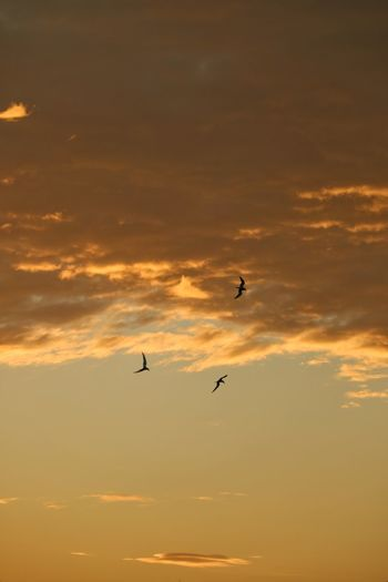 EyeEm Selects Flying Sunset Animal Themes Vertebrate Animal Bird Animal Wildlife Animals In The Wild Sky Group Of Animals Silhouette Cloud - Sky Mid-air Beauty In Nature Orange Color Scenics - Nature No People Tranquil Scene Nature Tranquility