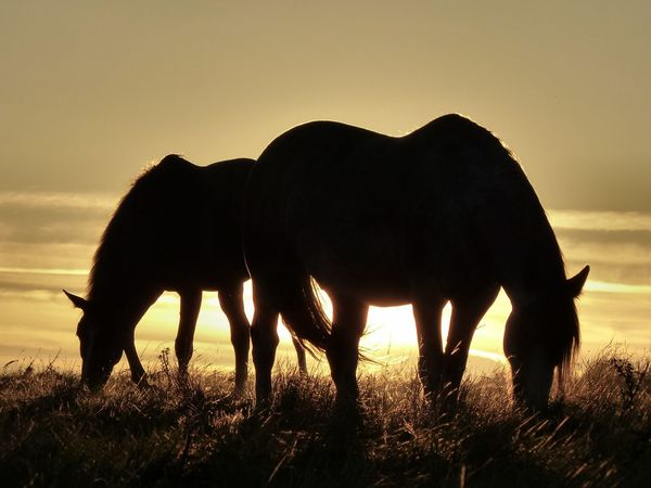 Horses feeding on the South Downs, as the sun sets on a warm August evening - 2016. Countryside England England🇬🇧 Horses South Downs South Downs National Park Truleigh Hill West Sussex