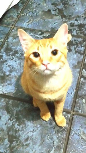 Este é o Milho Cat Catsofinstagram Catsagram Cat Lovers Pets