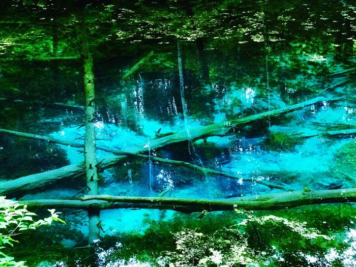 Aoinuma Blue Swamp Hokkaido Water Nature Day No People Tree Outdoors Green Color Beauty In Nature Forest Underwater Growth Close-up