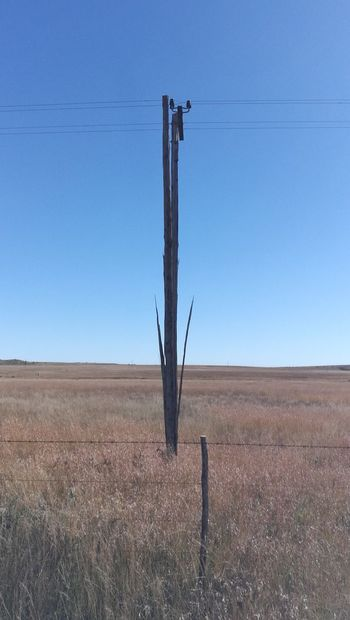 split hairs.......in the Karoo we got split poles after the lighting storm... Lighting Landscape Sky Land Nature