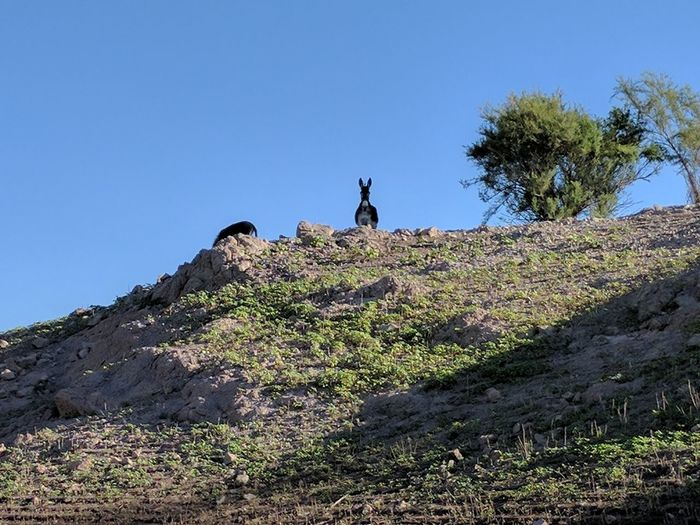 Man climbing on mountain against clear sky
