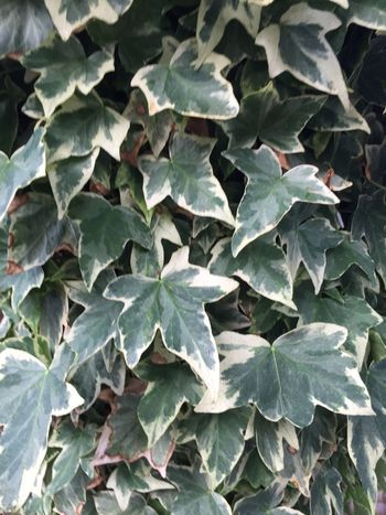 Leaf Plant Part Growth Green Color Full Frame No People Nature Natural Pattern Pattern