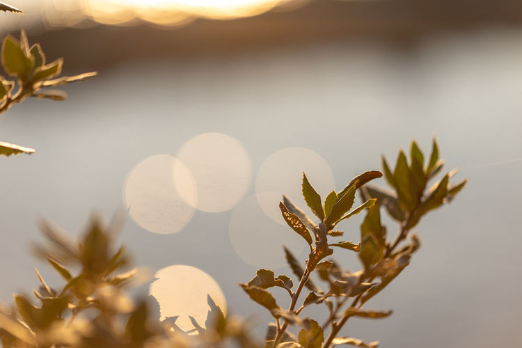 mediterranean mood Plant Growth Beauty In Nature Focus On Foreground Nature Close-up No People Selective Focus Tranquility Leaf Plant Part Outdoors Sunset Day Sunlight Vulnerability  Fragility Lens Flare Mediterranean  Italy Liguria Bokeh Bokeh Photography Springtime Warm Colors