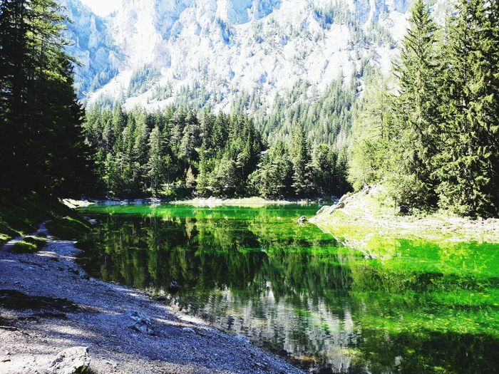 reflecting lake 💚 Summer Summertime Aussicht Green Grün See Natur Steiermark Austria Sun Grüner See Tragöss Holiday Sunny Vacations Vacation Styria crystal clear Reflection Water Day Nature Outdoors No People Lake Tree Beauty In Nature