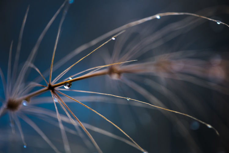 Freshness Grass Mirroring After Rain Bokeh Close-up Dark Background Day Drops Of Water Fragility Fragility In Nature Grasses Grasses In The Wind Nature No People Outdoors Water