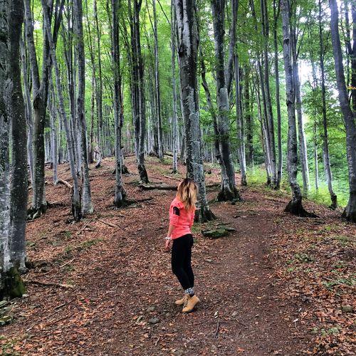 WoodLand Forest Tree Tourism Lifestyles