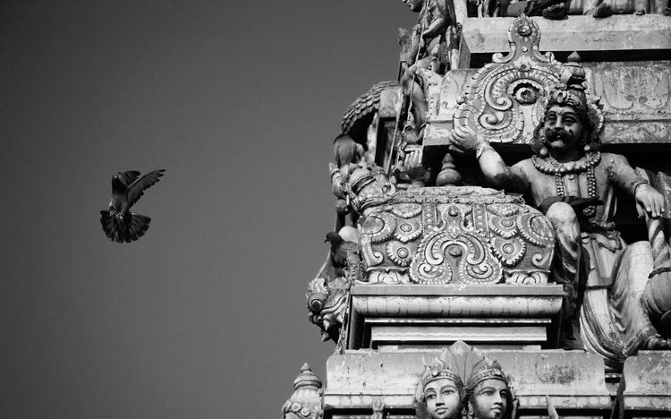 Learn & Shoot: Balancing Elements India Temple Bird Freebird Religion Pigeon Sculpture Showcase March Balance Flight Bird In Flight Religious Architecture Photography In Motion Chennai Here Belongs To Me Break The Mold