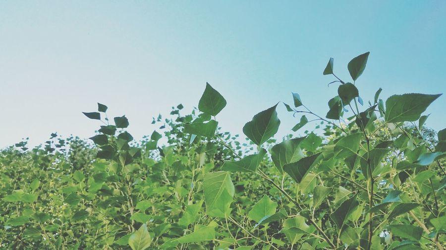 Nature Sky Leaf
