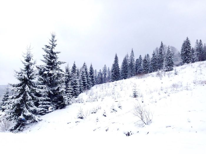Карпаты буковель Karpaty Bukovel Snow ❄ Snow Winter Fir-tree Carpathians