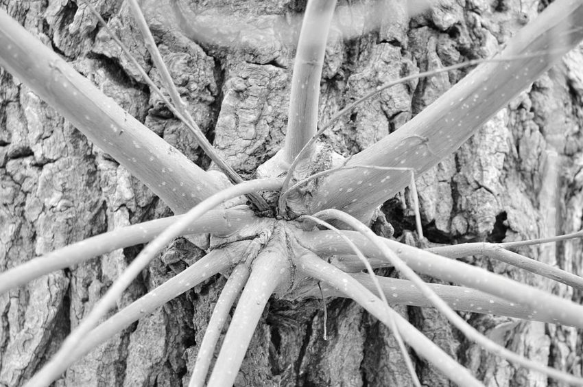 Virus Cell or Mosters in Trees. Black And White Black & White