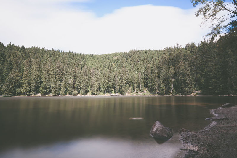 Coniferous trees against cloudy sky with lake in foreground