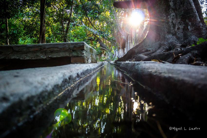 Lavaderos de antaño, se encuentran en un lugar escondido lleno de bellezas naturales dentro de una ex hacienda en Tonaya, Jalisco. Sun_ Collection EyeEm Nature Lover Water_collection Lugares De México