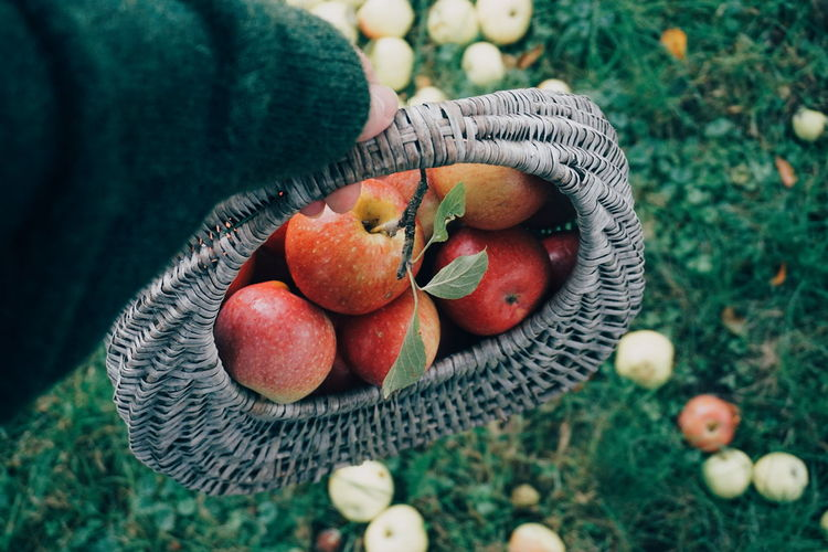 picking organic apples Apple Apple - Fruit Apples Picking Fruit Healthy Eating Healthy Lifestyle Harvest Harvesting High Angle View Personal Perspective EyeEm Selects Fruit Tree High Angle View Red Close-up Grass Food And Drink Growing Autumn Mood