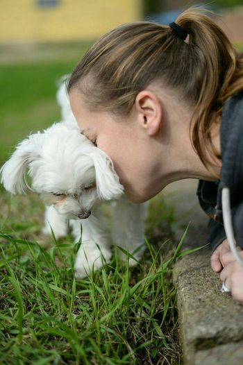 Ace giving out the lovins. Maltese, Puppy, Puppy Love Dog Prescott Voyageur Country Imaging