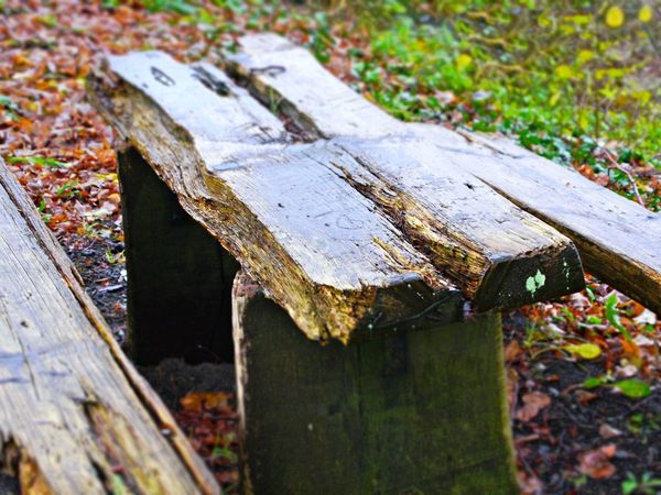 Bench Desk Leafs Close-up Damaged Day Nature No People Outdoors Rainy Day Wet Wood - Material Wooden Desk