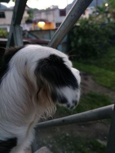 Ashly🖤 Domestic Animals Mammal Animal Themes Outdoors Pets Day
